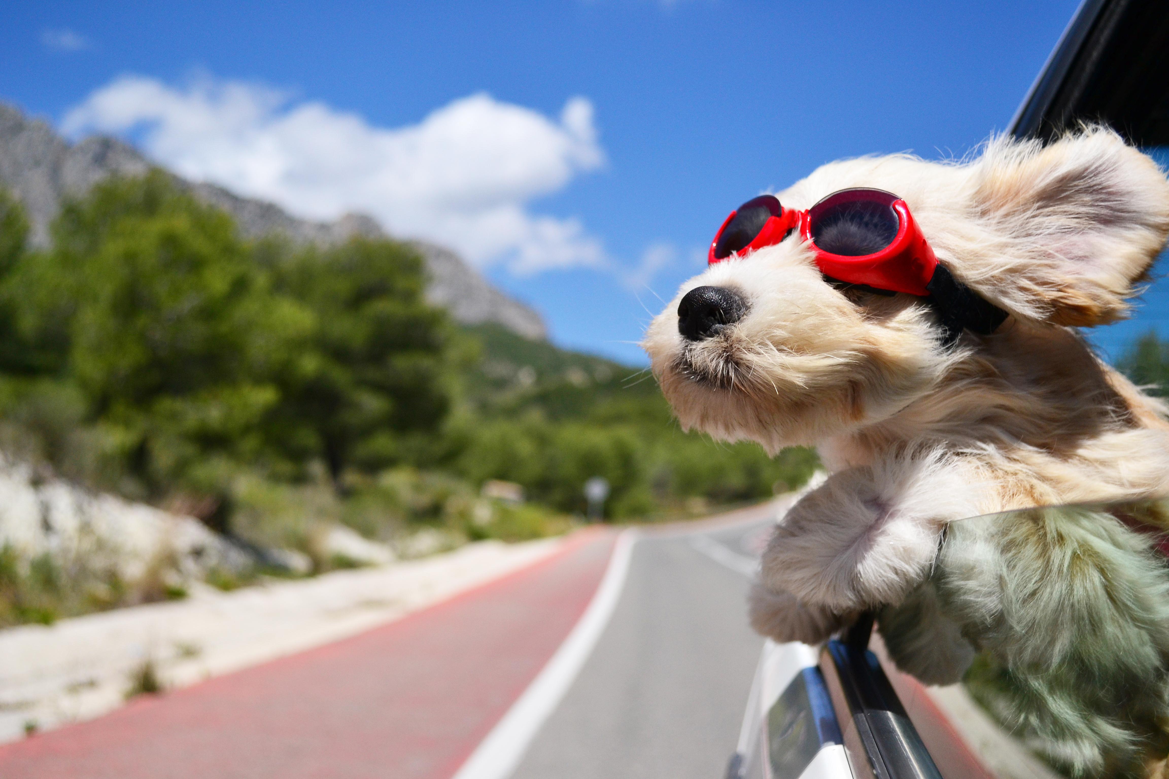 servicio-taxi-mascotas